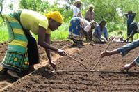 Eco Bio-Agriculture Matipwili Project