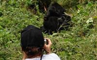 Eco Daily Safaris
